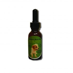 200mg CBD Oil California Beach Dog